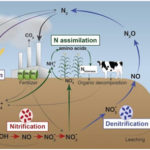 Nitrogen Cycle Definition, Process and Steps/Stages
