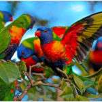 Incredible and Rare Birds - You Might Not Know