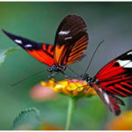 Most Beautiful Insects in the World