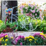 6 Low Maintenance Plants - Best for Your Garden