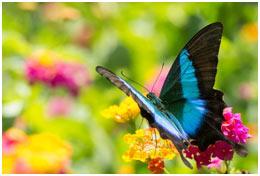 butterflies-featured