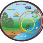 Ecology, Ecosystem and Major Components of Ecosystem