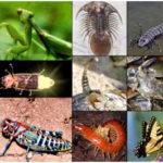 Phylum Arthropoda - Animals with Jointed Legs