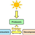 Bioenergetics- The Energy Relationships in Biological System