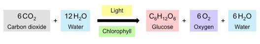Photosynthesis-chemica