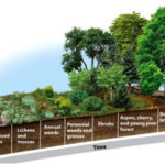 Ecological Succession - Primary & Secondary Succession Explained