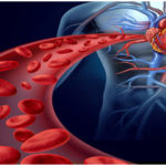 Blood Circulatory System in Humans