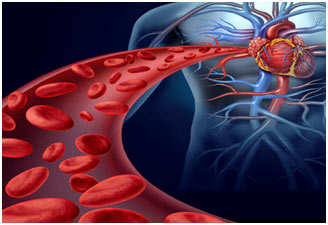 Circulatory-System-in-humans