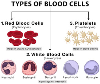 blood-cells-type