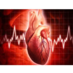 Human Heart Structure, Function, and Facts