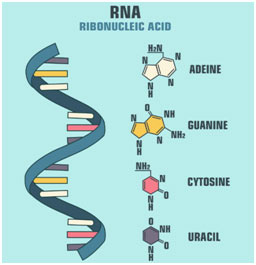 RNA-Structure-featured
