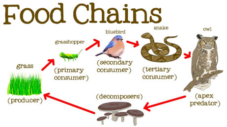 Food-Chain-featured