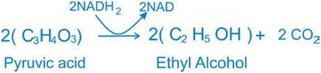 Anaerobic-equation
