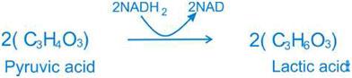 Lactic-acid-equation