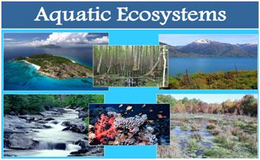 Aquatic-Ecosystem