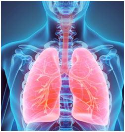 Respiratory-System-fea