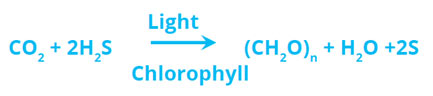 Bacteria-Photosynthetic-equation