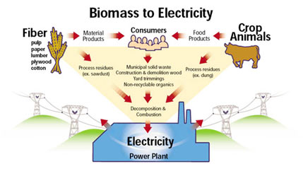 Energy-from-Biomass