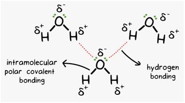Hydrogen-Bonding-Water