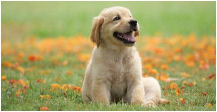 Handsome-Dog-featured