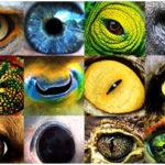 Most Amazing Eyes in Animal Kingdom