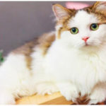World's Very Charming Cat Breeds