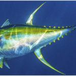 9 Fastest Ocean Animals