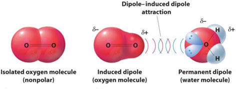 Dipole-induced-Dipole-