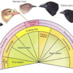 Speciation - Definition, Causes, Process, and Types of Speciation