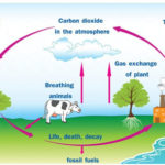 The Carbon Cycle - Definition, Significance, Steps and Land & Oceanic Cycle