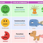 Symbiosis Definition, Types, and Examples