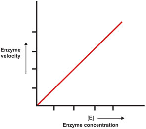 Enzyme-Concentration