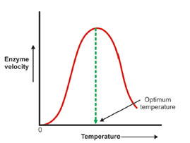 Enzyme-Temperature
