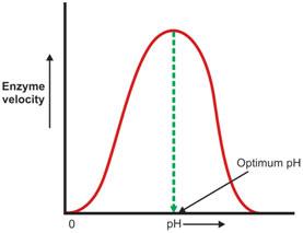 Enzyme-ph-velocity