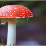 Fungi - Taxonomic status, Body, Nutrition, Growth of Fungi
