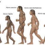 Evolution of Modern Humans - The Homo Sapiens Sapiens