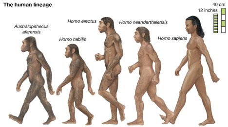 humans-Evolution