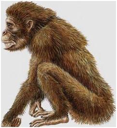 Evolution-Dryopithecus