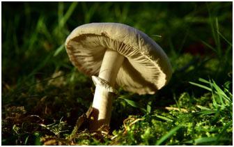 Fungi-Classification-f