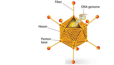 Viruses-classification
