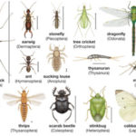 Classification of Insects - Exopterygota, Endopterygota, Orders of insects & Beneficial and Neutral insects