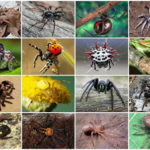 The Most Venomous Spiders on the Planet