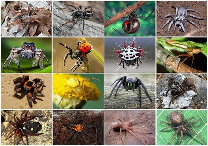 Venomous-Spiders