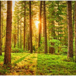 Top World's Beautiful Forests