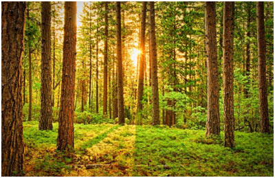 Beautiful-Forests