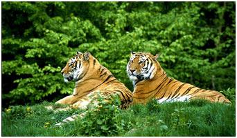 Fauna-of-Asia