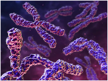 Chromosomes-featured