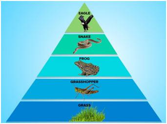 Ecological-Pyramids