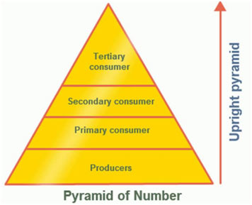 Pyramid-of-Number