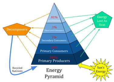 Pyramid-Examples